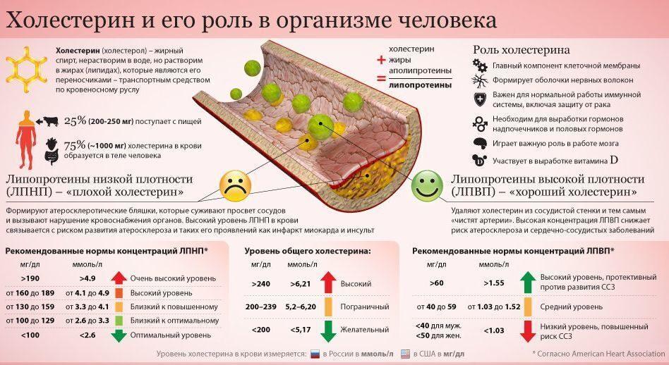 Народные методы для борьбы с холестерином