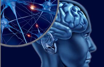 Трегалоза и нейродегенеративные заболевания