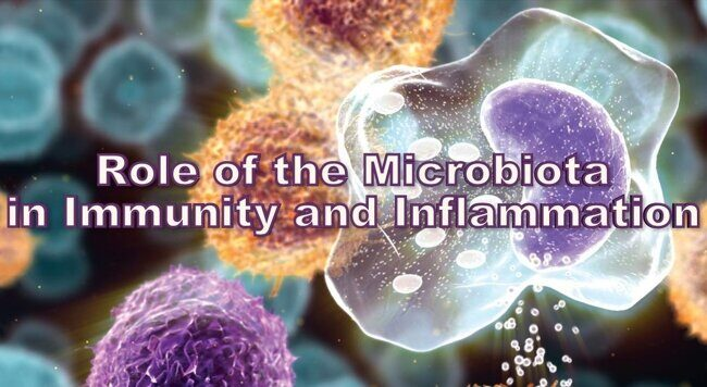 Role of the Microbiota in Immunity and Inflammation